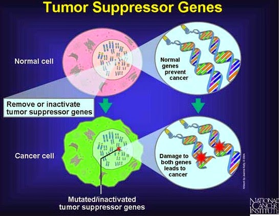Oncogene vs tumour suppressor genes