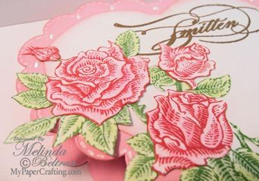 roses closeup-hbox-500