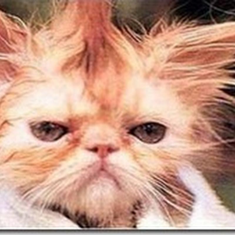 Jangan Buat Rambut Macam Ni..