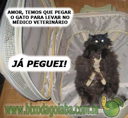 Levando O Gato Ao Médico Veterinário Bixo Da Goiaba