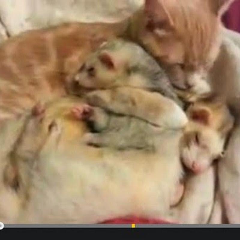 Γάτα κάνει παρέα με τους νέους φίλους της