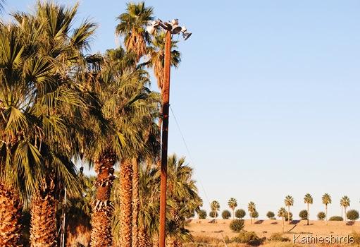 2. palms-kab