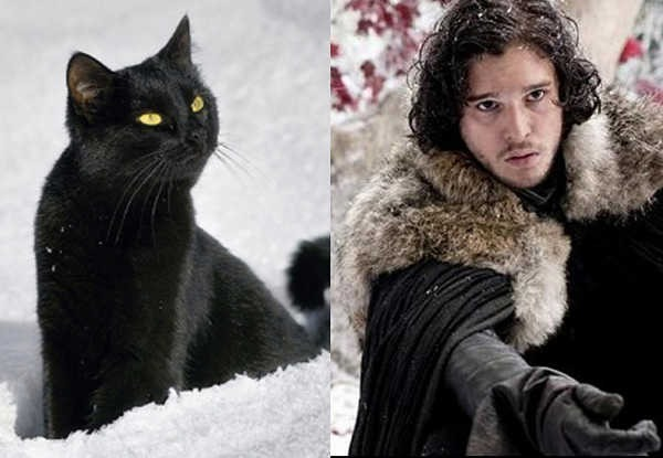 E se os personagens de Game of Thrones fossem gatos 13
