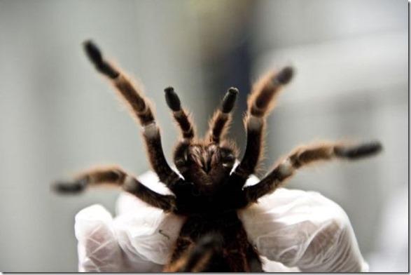 spider-farmer-juan-12