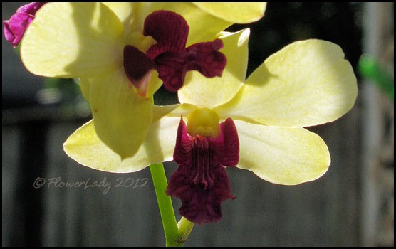 06-01-unkn-orchid