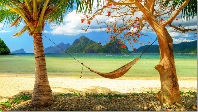 hammock_coast_palm_tree