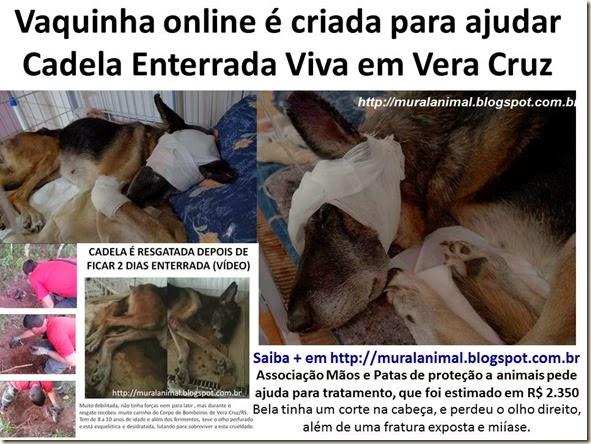 Vaquinha online é criada para ajudar Cadela Enterrada