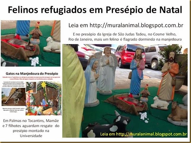 Felinos refugiados em Presépio de Natal