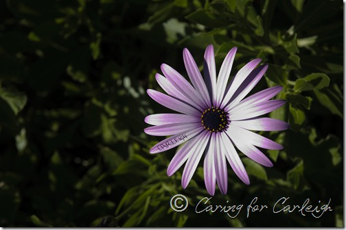Carleigh's Flower - Rory's Garden