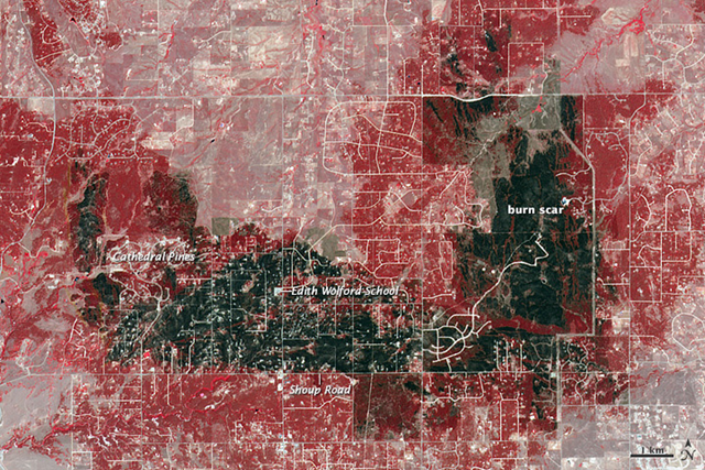 The Terra satellite acquired this view of the burn scar from the Black Forest fire, the most destructive fire in Colorado history, on 21 June 2013. Vegetation-covered land is red in the false-color image, which includes both visible and infrared light. Patches of unburned forest are bright red. Unburned grasslands are pink. The darkest brown areas are the most severely burned. Buildings, roads, and other developed areas appear light gray and white. The most severe damage occurred north of Shoup Road. Photo: Jesse Allen and Robert Simmon / NASA Earth Observatory
