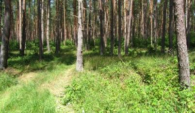 16 - Im Wald