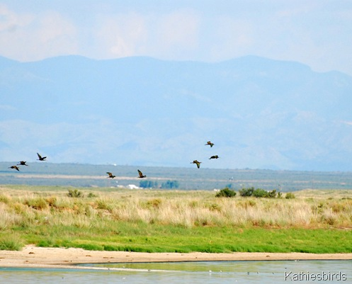 3. ibis-kab