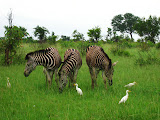 South Africa - 057.JPG