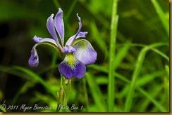 Arcadia  _ROT8647 NIKON D3S June 30, 2011