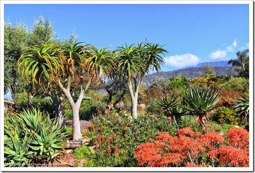 150323_Carpinteria_SeasideGardens_0031