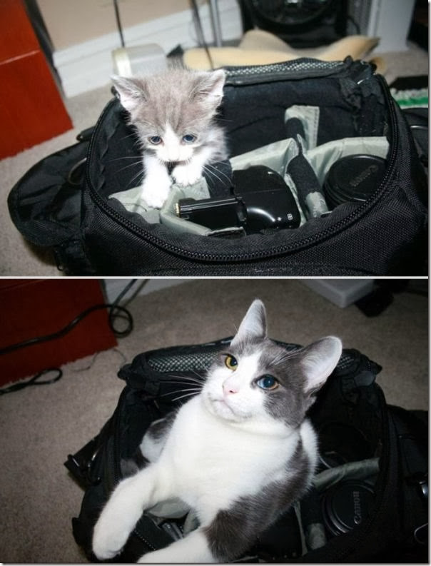Antes e Depois de Animais de Estimação (2)