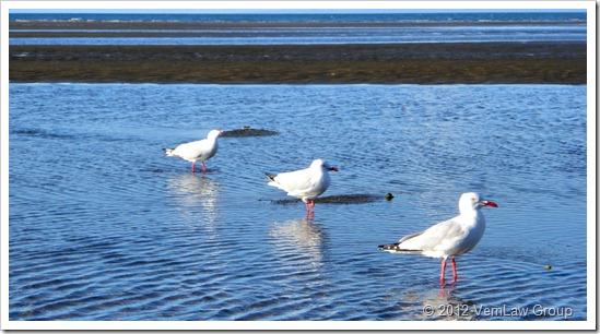 SeagullTripP7100377