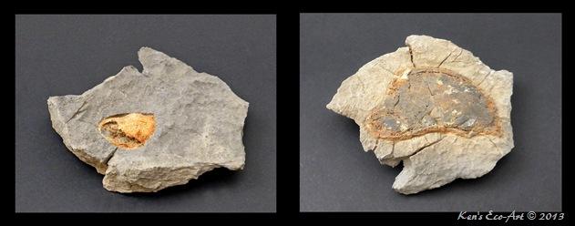 Yucca Peak Fossil 02