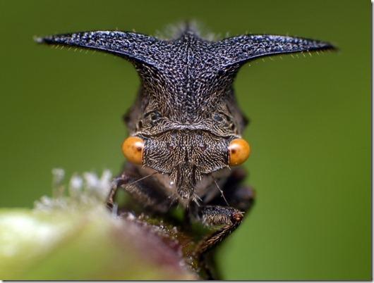 жизнь-насекомых-2-960x720
