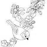 oiseau60.jpg