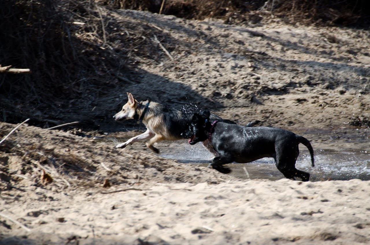 Dogs playing at Herbert Taylor park beach