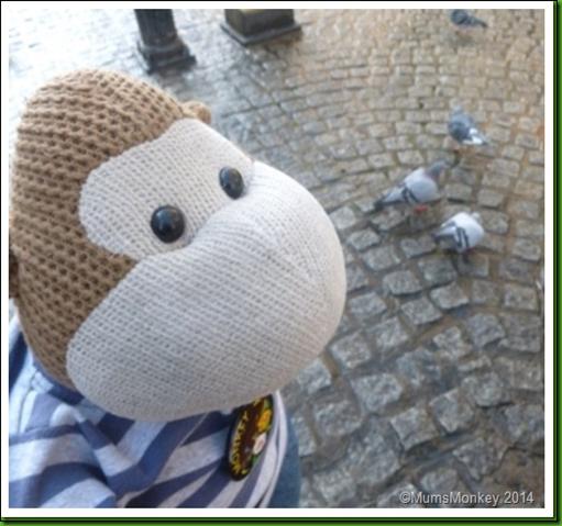 pigeons..2