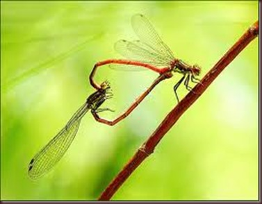 Amazing Pictures of Animals, photo Nature, exotic, funny ,incredibel Zoo, Dragonfly, Insecta, Alex (23)