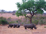 South Africa - 489.jpg