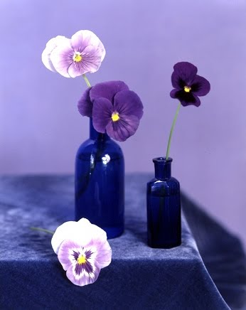 Pansies and violas in blue vases. (Martha Stewart Living)