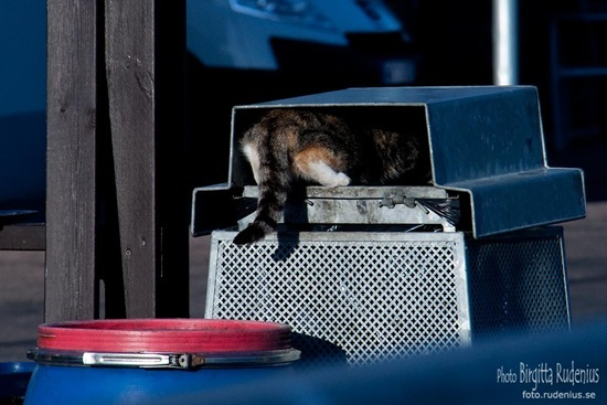 djur_20111016_katt