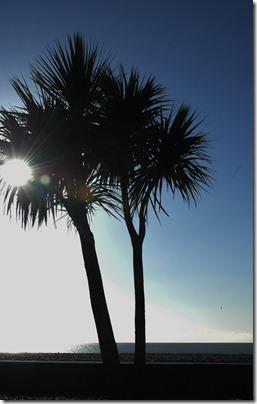 beach walk 004