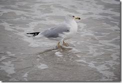 Beach Feb. 2012 061