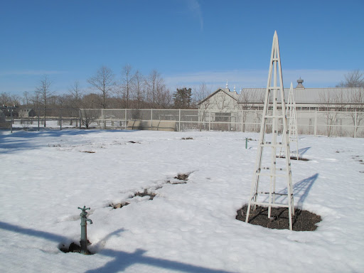 The vegetable garden is a barren, frozen tundra.  Let me pop into the greenhouse and see what's happening in there.