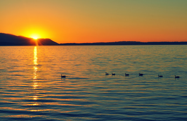 July/August 2013 - 2nd Place / Birds enjoying sunset swim on Bellingham Bay / Credit: Allison Wagner