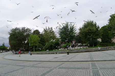 Birds of Istanbul