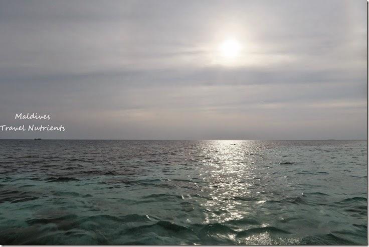 馬爾地夫 野餐島 浮潛 (60)