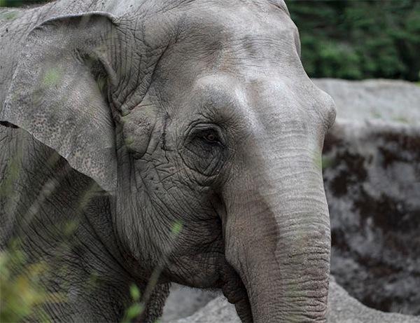 Elephant 1Blog