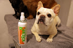 We Frenchies don't have problems with tangles as we have easy to manage short hair, but the thickness and length of Chow Chow fur can cause mats!  Let's use this natural botanical conditioning spray to make it easier to brush him!