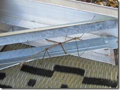 Stick Bug (3)