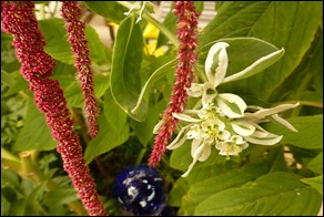 Love-Lies-Bleeding-2