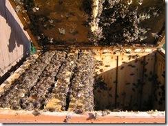včelky a med květen 142