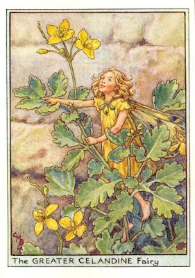 greater_celandine_flower_fairy.jpg