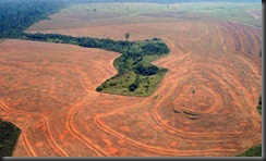 Deforestation-in-Novo--Pr-001