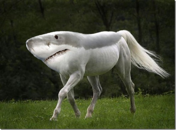 photoshop-animals-pixels-4