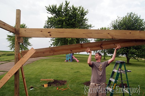 Building a Pergola (Sawdust and Embryos)