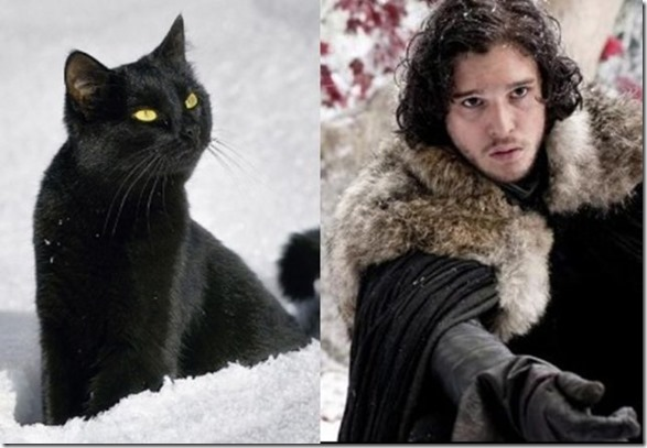 cats-game-thrones-5