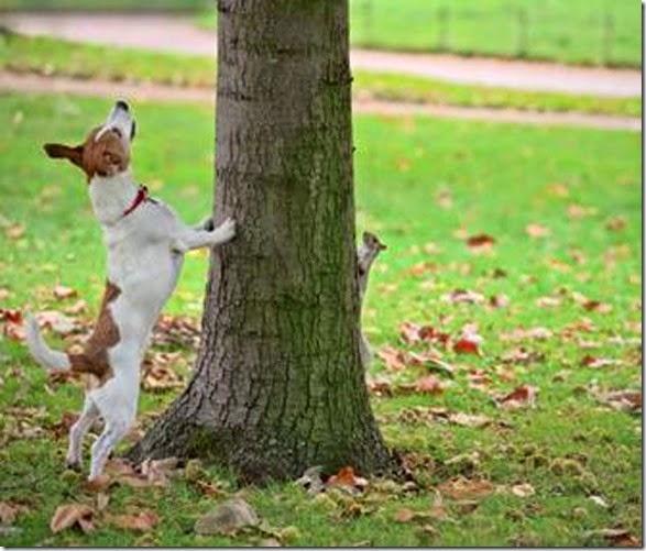 dogs-best-friend-004