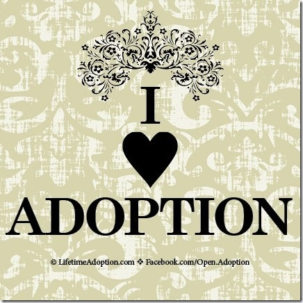 adopcoon (2)