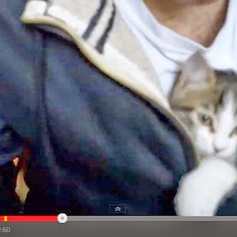 Γατάκι στο  πουλόβερ ιδιοκτήτη