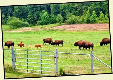 02c -  Bison Range